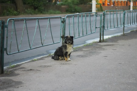 stray: Stray dogs on street makes fear people