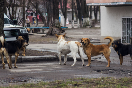 brown and black dog face: Stray dogs on street makes fear people