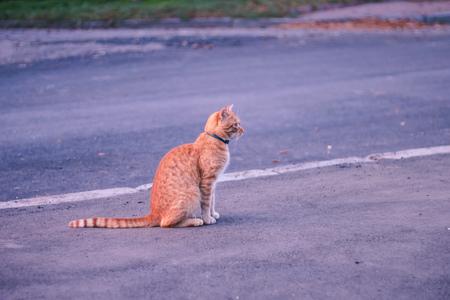 Angry cat closeup