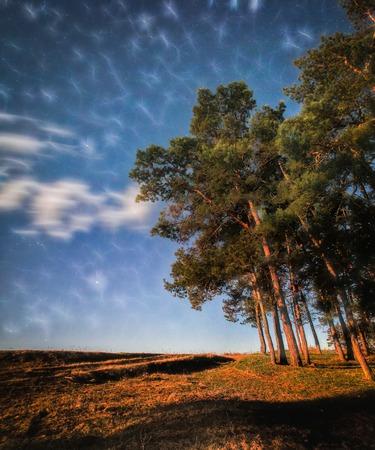 twilight night photo of forest - see stars milky way