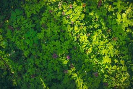 Green leaf texture, forest plants background with violet flowers