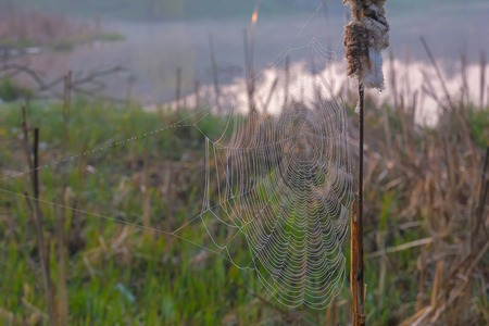 Spider web with colorful background at morning