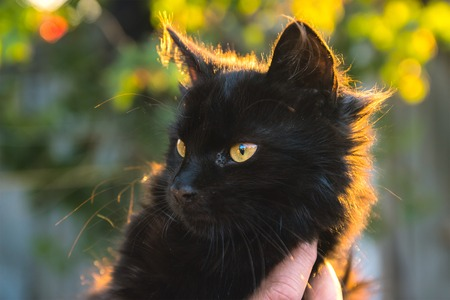 Cute kitten in hand at evening sunrays