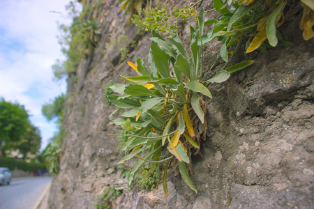 Little plant growing in the hole of wall