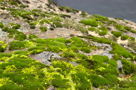 Gray stone with green moss texture background overgrown in forest Stock Photo