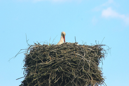 wildlife preserve: Waiting for a frog. Young stork in a nest