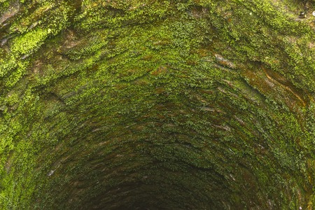hollow wall: old deep well with moss and reflection in bottom Stock Photo