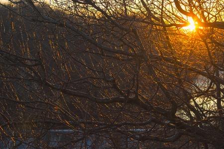 Big sun over the tree in the sunrise Stock Photo