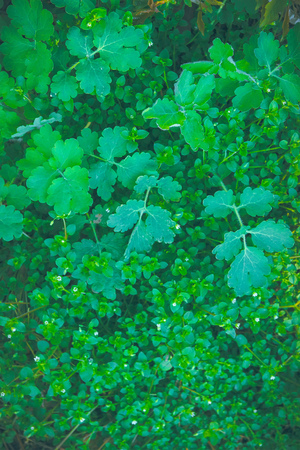 Abstract Green leaf texture, background in deep forest