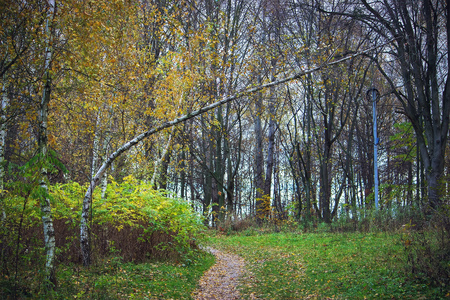 View of the rural path and trees at forest in the autumn day Stock Photo