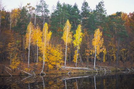 Fall Colors at Island. Reflections along the waters edge
