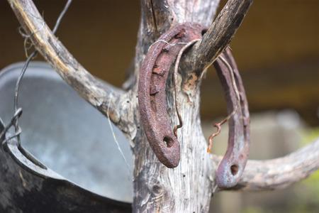 Old rusty horseshoe on a tree background