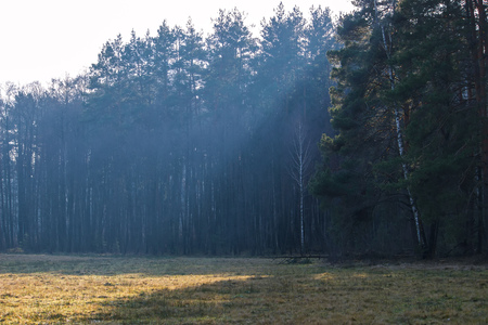 the rays of the sun fall on a part of the forest
