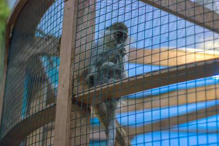poor monkey in a cage turned around Stock Photo