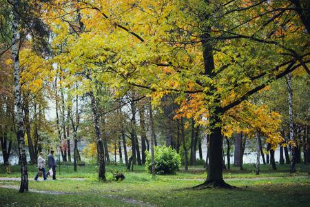 가을 날에 숲에서 아스팔트 경로와 나무보기 스톡 콘텐츠 - 102911951