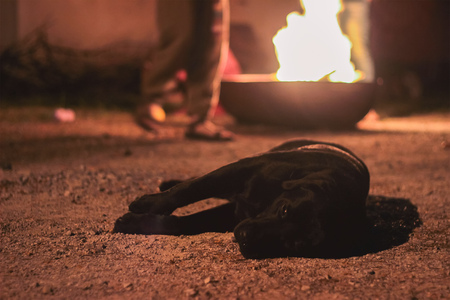 Homeless dog with sadness in his eyes lies on the ground near campfire Stock Photo