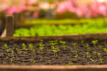 Growing seedlings in peat pots. Plants seeding in sunlight in modern botany greenhouse, horticulture and cultivation of ornamental plans, top view Stock Photo