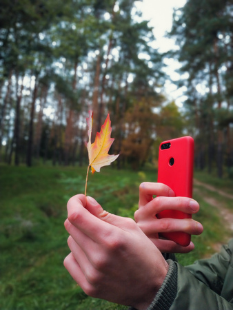 man is taking a photo on red smartphone autumn maple leaves