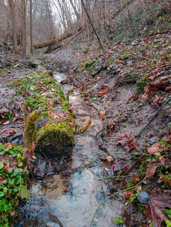 Muddy road in rural path at the forest with a creek. Stock Photo