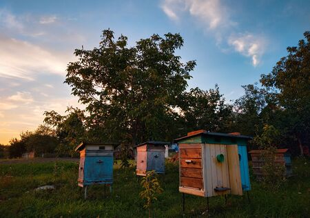 Multicolored beehives at evening landscape. Sunset landscape in the meadow Stock Photo