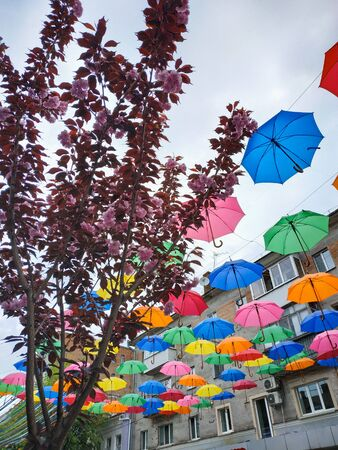 Colorful umbrellas with flowering sakura background. Colorful umbrellas in the cloudy sky. Street decoration.