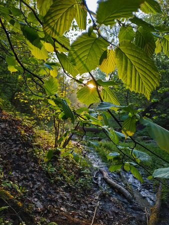 Perspective view on green leaves with sun ray in the creek forest Stock Photo