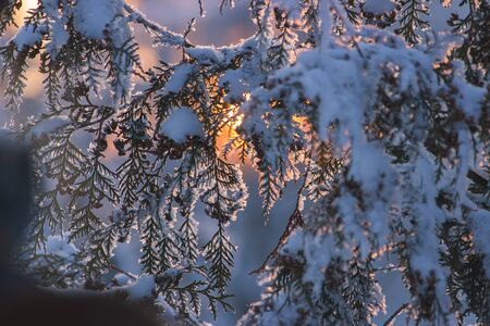Winter nature background. Christmas holiday backdrop, Frozen tree branch at evening