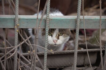 Industrial Cat Walking from abandoned Plant and sitting