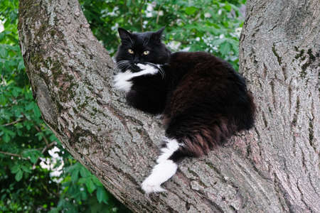A lazy black cat rests on a tree. Good luck signal.