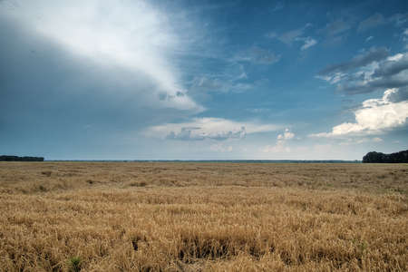 Dramatic sky over wheat field. Danger weather with dark sky over fields.