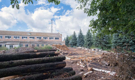 Pine wood logs stacked in yard of lumber mill.