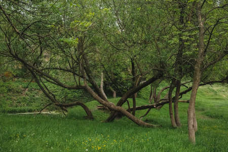 City Park , tangled tree trunks in the meadow.