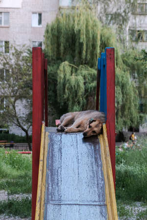 dog sleeps on slide in the playground at cloudy summer day.