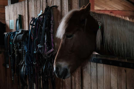 brown horse in the stable. horse in his aviary. stable with animals. horse through the cage.