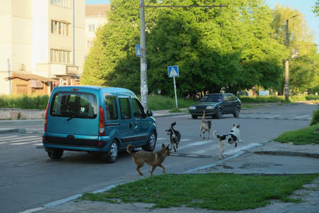 Car attacking stray mad dogs on the road. Zdjęcie Seryjne