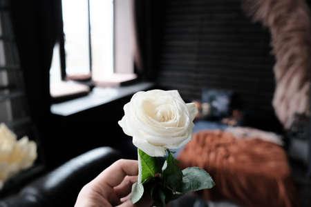 hand holding white rose on dark interior background