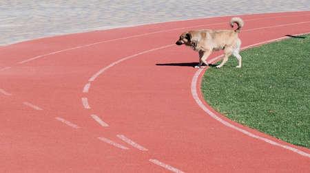 Stray dog walking on ramp in racing track alone. Foto de archivo