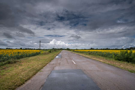 Cracked road in sunflower fields and cloudy sky. Before th storm