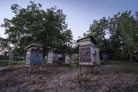 Beehives at the edge of the forest in the evening at sunset.