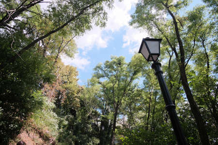 A Beautiful Lamp Post in the Woods. Low angle horizontal view. Foto de archivo