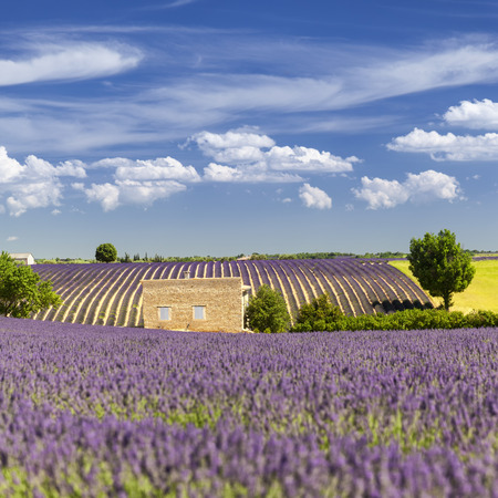 Provencal house among the lavender fields, France Stock Photo