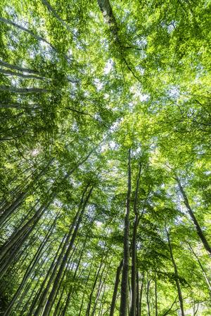 Vertigo under trees