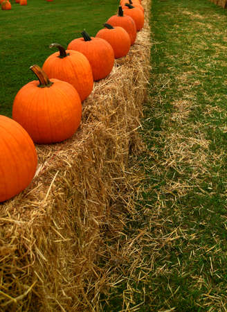 A row of large ripe pumpkins sitting on hay bales for sale.