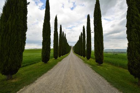 Tree-lined street in Val DOrcia, Tuscany, Italy