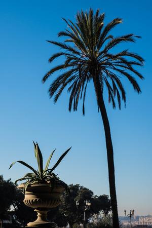 Palm at Villa Borghese, Rome, Italy