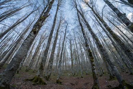 Forca d'Acero, Zugang zum Nationalpark der Abruzzen von Ciociaria, Lazio, Italien Standard-Bild - 76484004