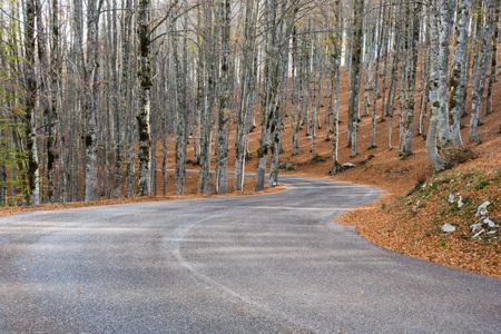 Herbst in Maple Fort, Abruzzen-Nationalpark, Italien Standard-Bild - 89051407