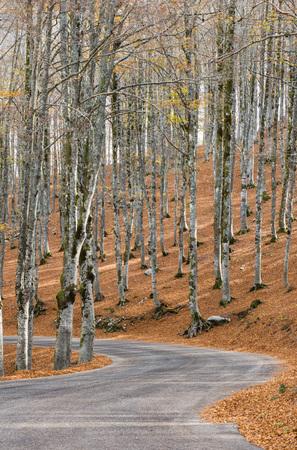 Herbst in Maple Fort, Abruzzen-Nationalpark, Italien Standard-Bild - 89051411