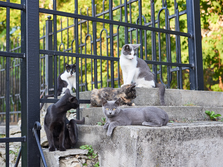 fight hunger: Pride street cats are sitting on the fence of the old park Stock Photo