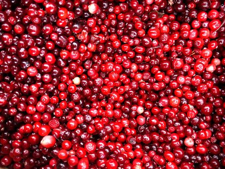 innumerable: Closeup of mass of red Cranberries as Texture Stock Photo